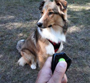 Hundetraining mit Clicker.